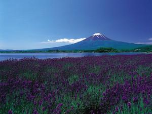 springtime in जापान