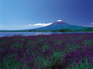 springtime in Jepun