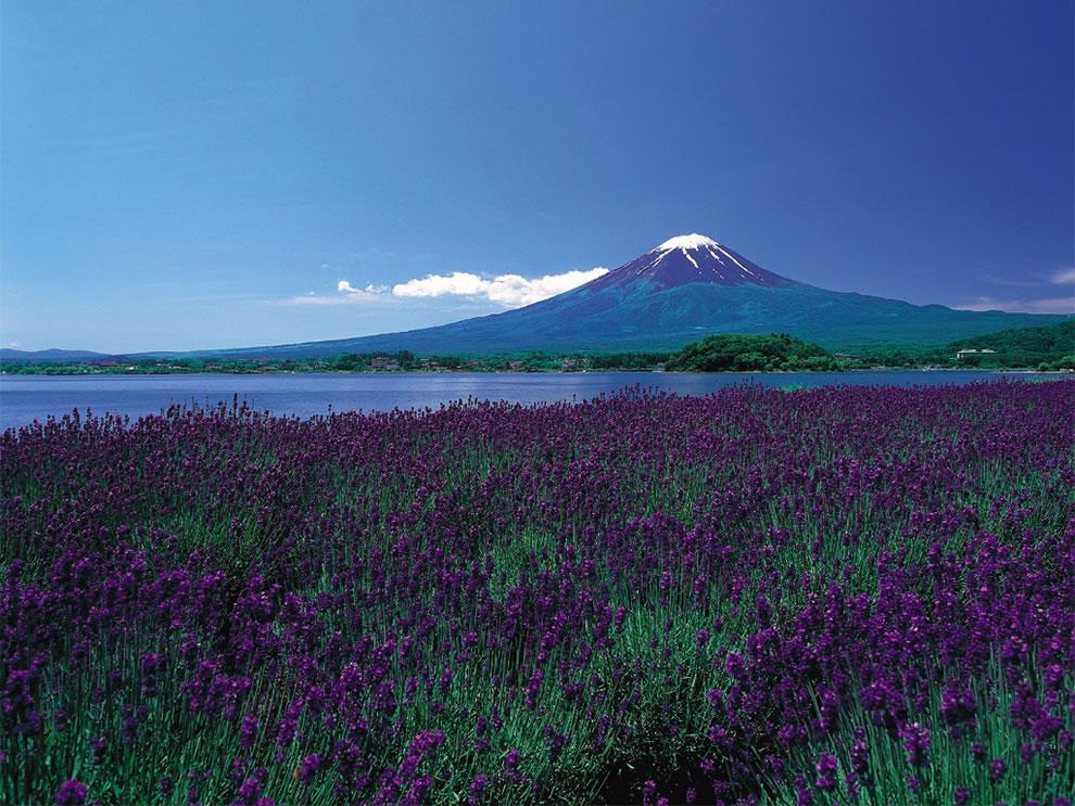 springtime in 일본
