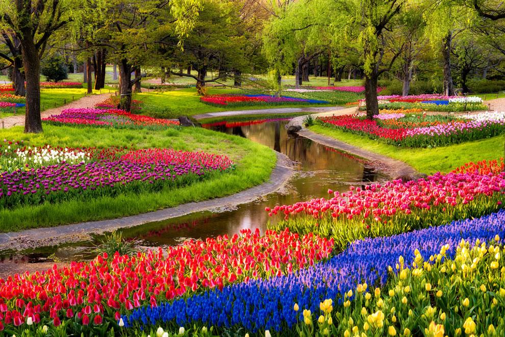 springtime in Giappone