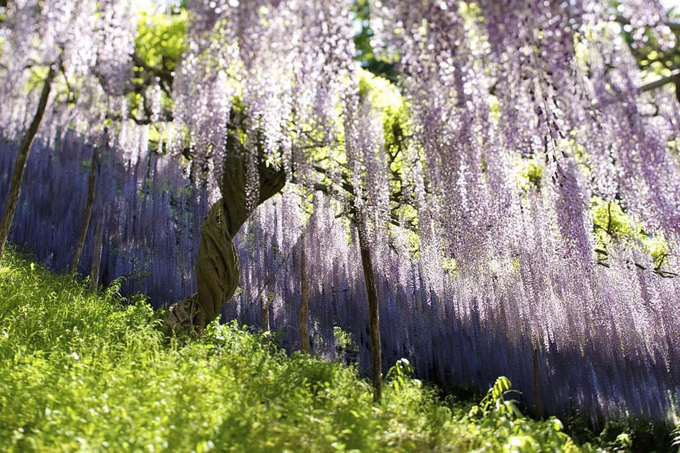 springtime in japan