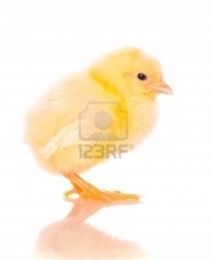 xxxCute Bird xxx