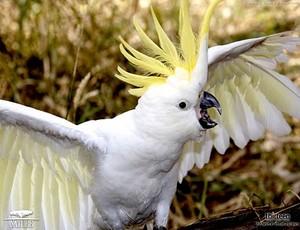 xxxCute Birdxxx