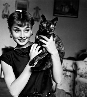 Actress, Audrey Hepburn Holding A Cat