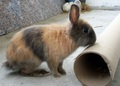 And again Jinxx  - bunny-rabbits photo