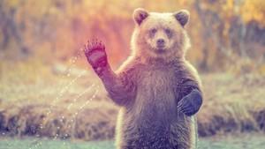 くま, クマ