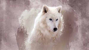 Beautiful serigala, wolf