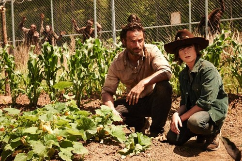 Chandler Riggs Hintergrund with a chainlink fence, a sugar beet, and a cassava titled Carl and Rick