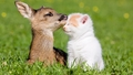 cats - Cat and Fawn                  wallpaper