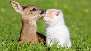 Cat and cerbiatto, fawn