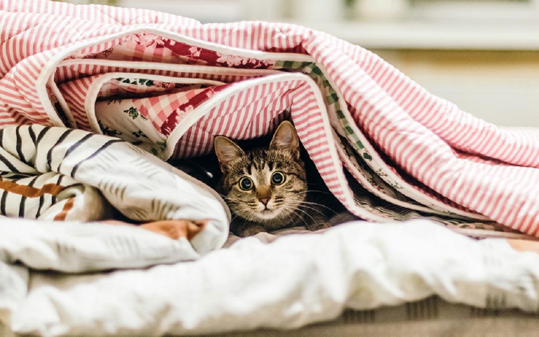 Стянул одеяло с сестры, Сводный брат забрался в постель к спящей сестре 3 фотография