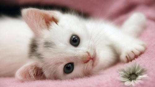 Cats wallpaper titled Cute Little Kitten
