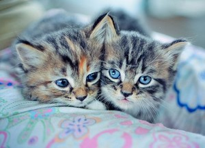 Cute Random Pics...♥