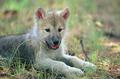 Cute wolf pup in field