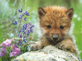 Cute wolf pup!!!