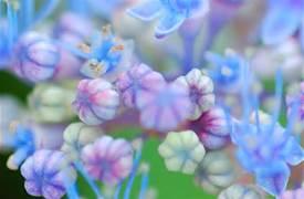 お花 For あなた ♥
