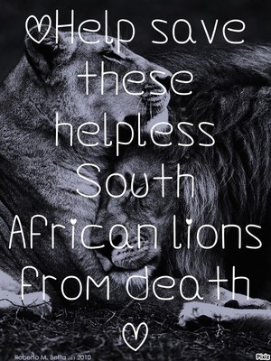 Help lions from death