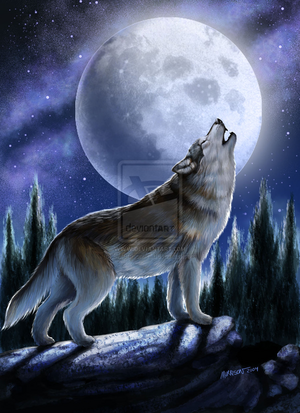Howling lobo in the moonlight
