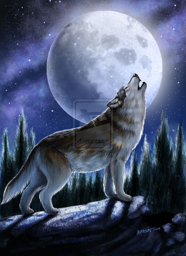 Wolves Images Howling Wolf In The Moonlight HD Wallpaper And