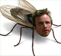 Jesse the Fly