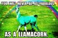 LLAMACORN!