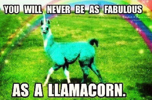Random wallpaper possibly with an alpaca entitled LLAMACORN!