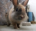 My little Jinxx - bunny-rabbits photo