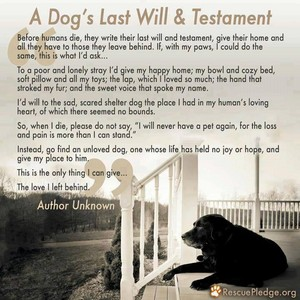 Please Read: A Dog's Will