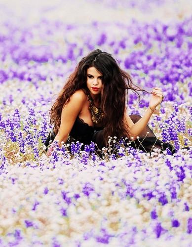 瑟琳娜·戈麦斯 壁纸 probably with a portrait titled Selena Gomez