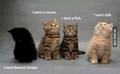 Severus and kitten