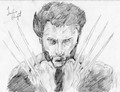 The Wolverine Sketch - wolverine photo
