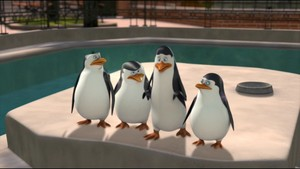 The penguins :p