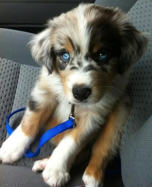 adorable 강아지