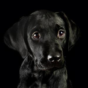 cute کتے