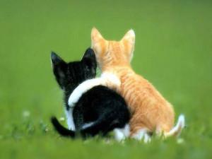cute 動物