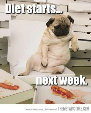 funny dog, 피자