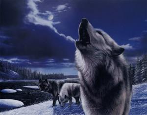 i upendo Mbwa mwitu loups