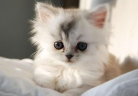 Sini12 바탕화면 entitled kitten <3333