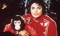 michael jackson and bubbles - michael-jackson photo