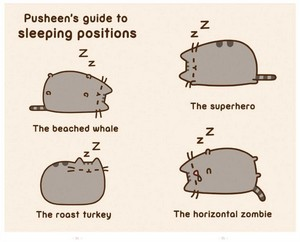 pusheen guide to sleeping postions