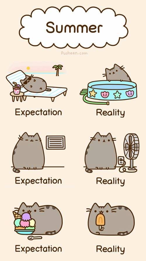 Pics Photos Pusheen The Cat S Expectation And Reality Of Summer