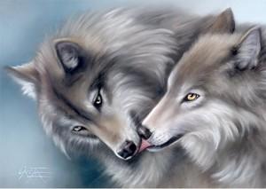 Mbwa mwitu loups kissing