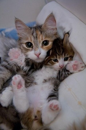 A Cat And Her Kitten