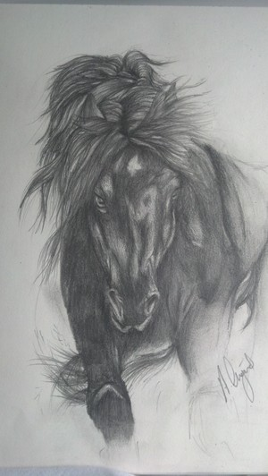 Black Freisian Horse