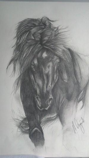 Black Freisian Horse
