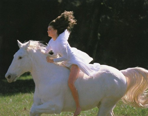 Brooke Shields wallpaper probably with a lippizan, a horse wrangler, and a horse trail entitled Brooke Shields