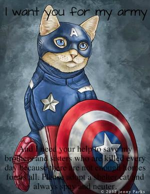 Captain America Cat