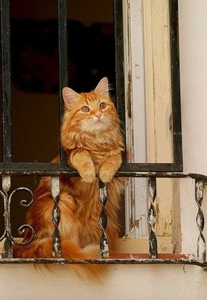 Cat Enjoying The View From The Balcony