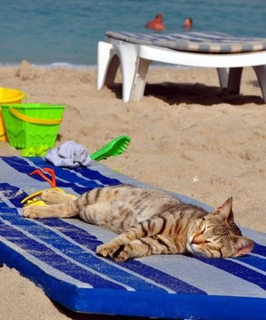 Cat Relaxing On The pantai