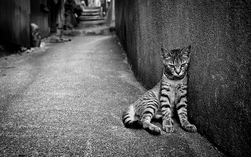 Black and white photography wallpaper possibly with a tabby and a tabby called cat street loneliness